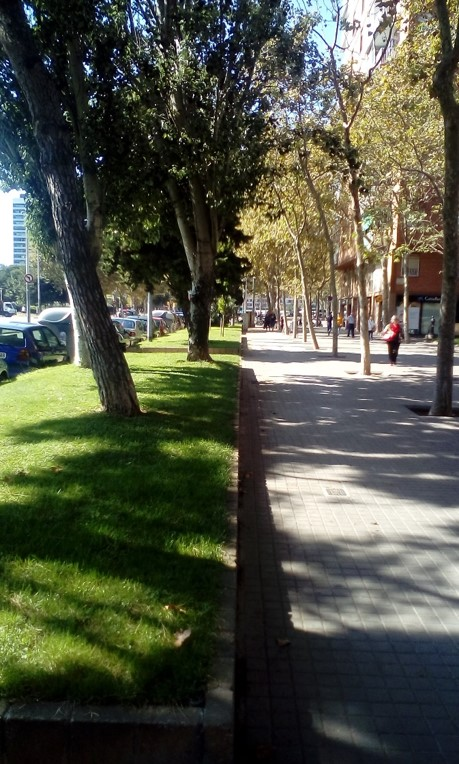 Close tree-cover along a shared path in Barcelona. Photo Credit - Ann Keih